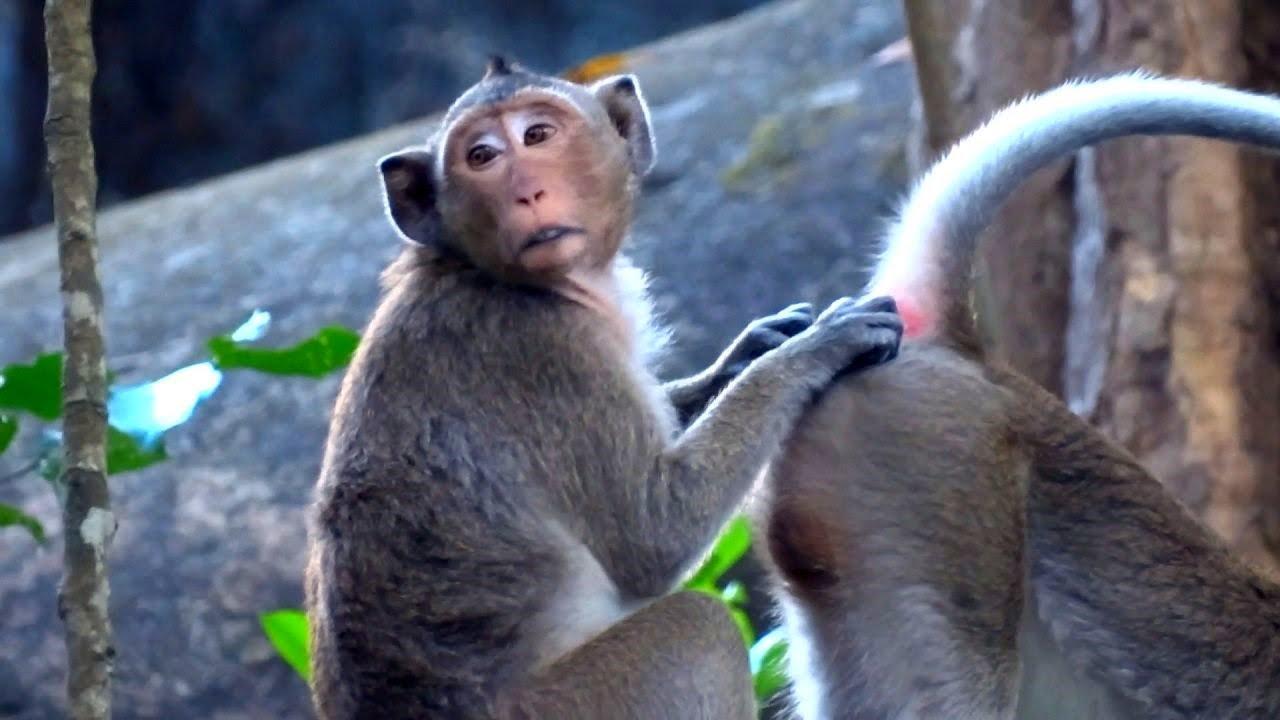 Resultado de imagen para monos en patinets