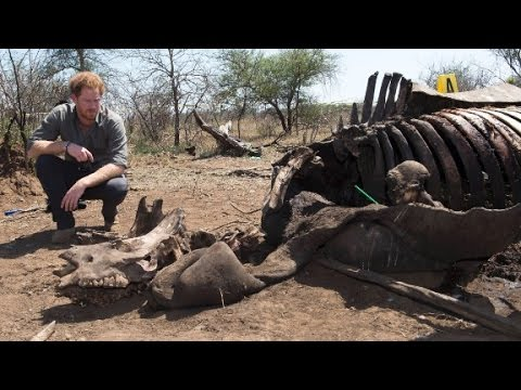 Prince Harry rips poachers on South Africa trip