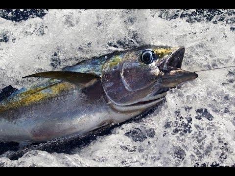 Cheap Bullion Alert - 2014 Tokelau Yellowfin Tuna 1oz Bullion Coin