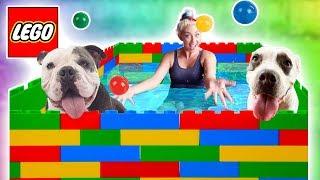 puppy-plays-in-lego-pool-so-cute