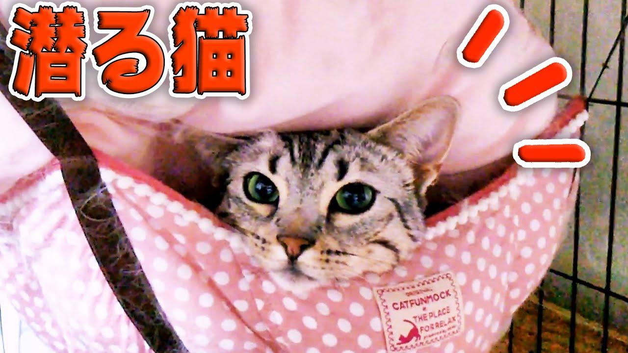 とっぷりと潜り込んだ短足猫  A short-legged cat sneaks in hammock.