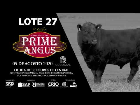 LOTE 27   BLACK OPAL TEI931PORTER LUGER Prod  Agência El Campo