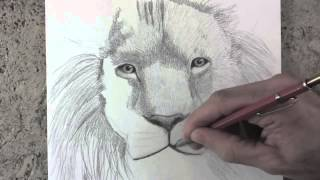 Repeat youtube video Karakalem Aslan Çizim Tekniği [Karakalem Çizim Sanatı]