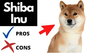 Shiba Inu Pros And Cons | The Good AND The Bad!!