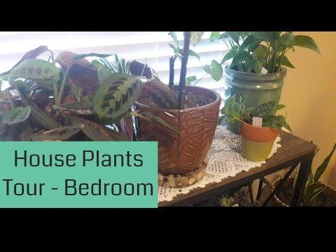 Tropical House Plants Tour (Bedroom) February 2018