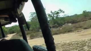 safari Sri Lanka, птица-носорог