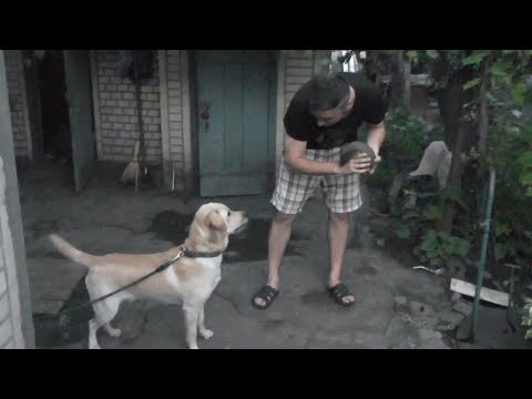 Ёжики милые) - YouTube