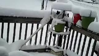 Mucha nieve en mi estados unidos de la grange Kentucky