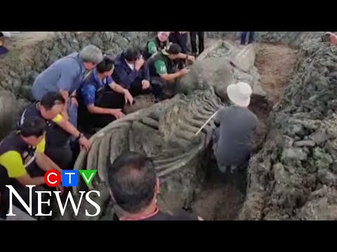 5000-year-old whale skeleton discovered