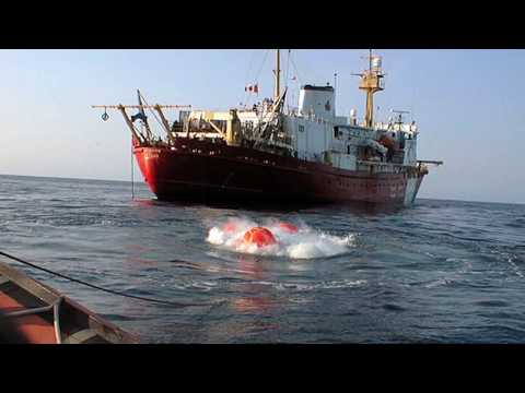 The Real Story on Seismic Blasting in Our Oceans