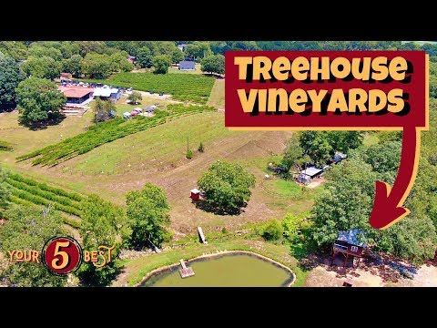 Treehouse Vineyards - 2019's Best Things To Do In Charlotte, North Carolina