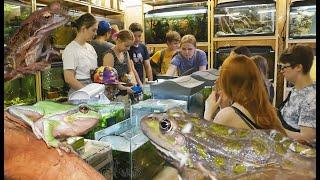 Как мы успели на выставку амфибий. И поглазели на потрясающих рыб в подсобках