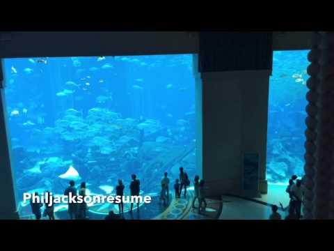 Revelation (Atlantis The Palm NOBU Aquarium Dubai 2015)