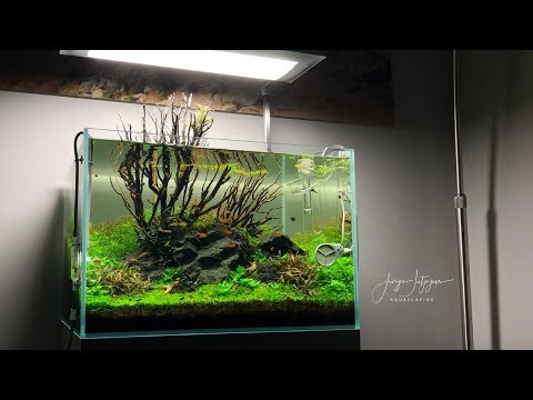 My best Aquascaping Contest result ever! Final update 60x50x40cm IAPLC 2019 Aquarium from YouTube · Duration:  11 minutes 50 seconds