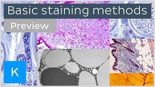 Basic histological staining methods (preview)  - Human Histology |Kenhub