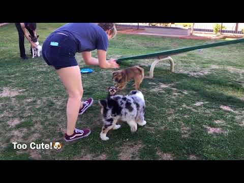 My Puppy NightWolf & Friends Play at Dog Park || Too Cute💗