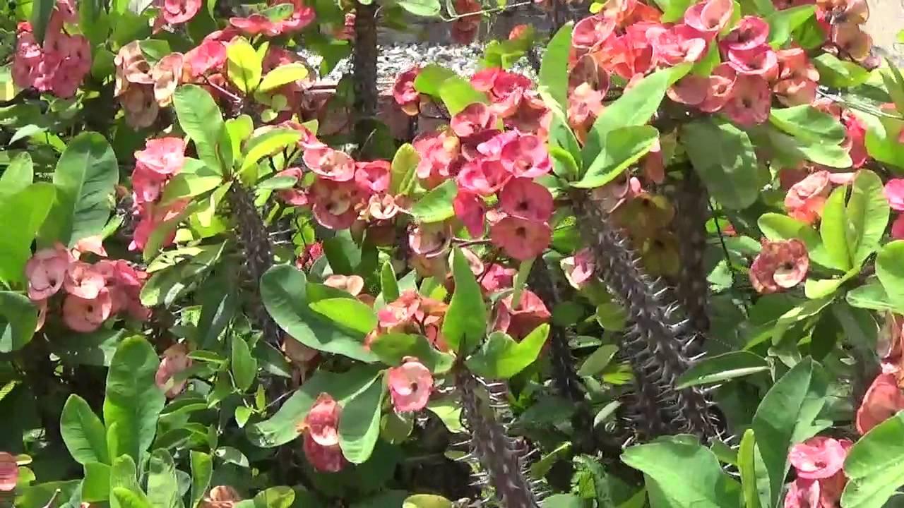 Flores tu y yo en el jardin botanico nacional de republica for Jardin botanico nacional