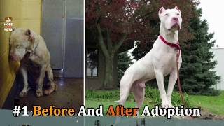 10 RESCUE ANIMALS JUST BEFORE AND AFTER ADOPTION .