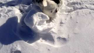 Snow Roller Mayhem with Gwen and Saphira