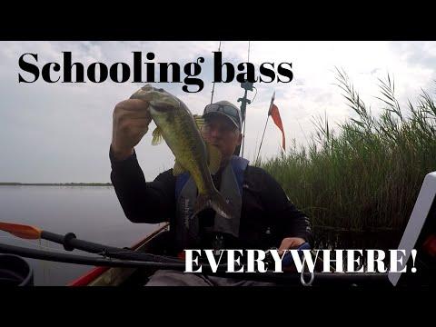 Back Bay NWR Bass Fishing