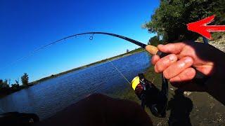Рыбалка на спиннинг ОНА ВЗЯЛА ПРЯМ У БЕРЕГА ЩУКА И ОКУНЬ (РАБОЧИЕ ЦВЕТА В АВГУСТЕ)