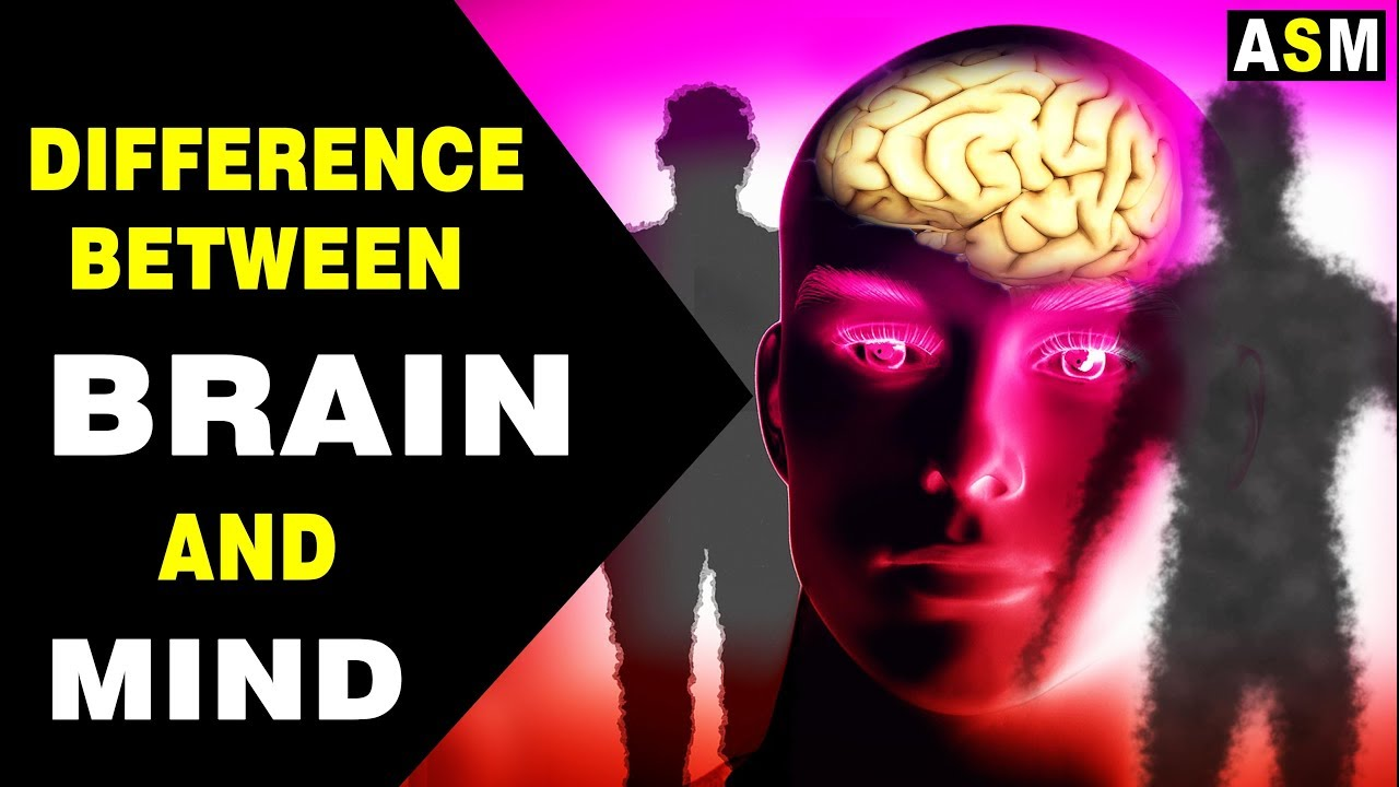 Difference between Brain And Mind   Brain vs Mind   - YouTube