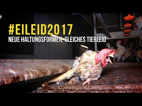 Eierrecherche 2017 / PETA