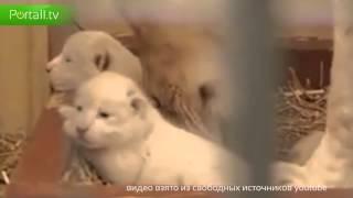 Веселая троица уникальных животных