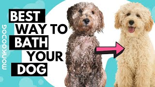 HOW to give a dog/puppy bath like a PROFESSIONAL at home. DOG grooming tips!