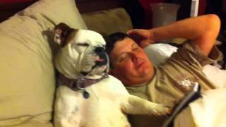 Lola The Bulldog Watching Tv