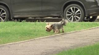 Чипирование собак отложено ещё на полгода