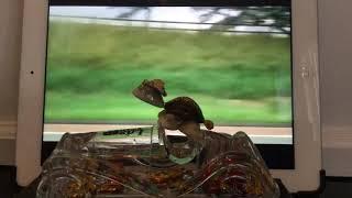 Grandpas turtles new car