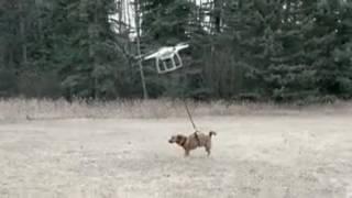 Когда нет времени выгуливать собаку