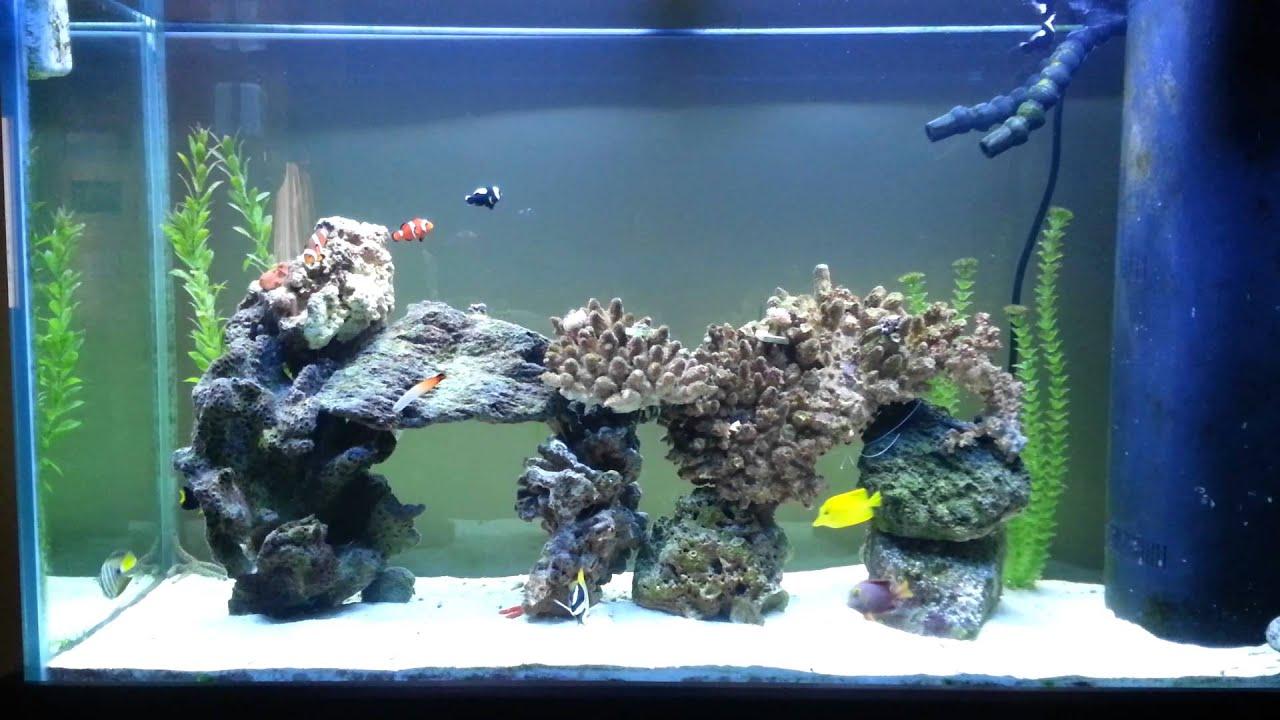 Saltwater aquarium 100 gallon 100 gallon reef aquarium for Fish tank equipment