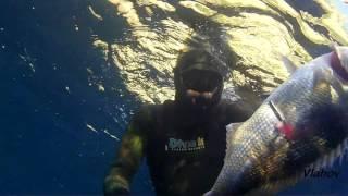 Spearfishing, Podvodni ribolov, Croatia, Dentex Dentex VI, 2015