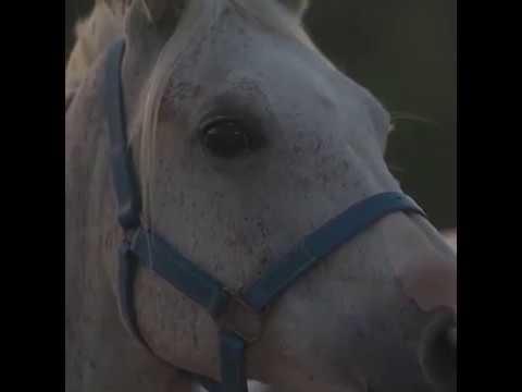 Horse Riding in Dubai – Horse Riding Clubs in Dubai