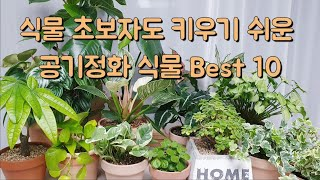 초보자도 키우기 쉬운 공기정화 식물 Best 10직접 …