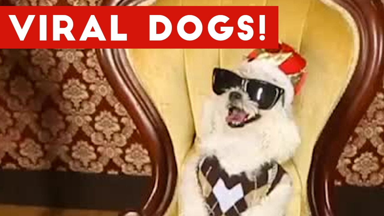 Funniest Viral Dog Videos Weekly Compilation 2017 | Funny Pet Videos