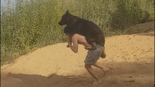 German Shepherd makes a hilarious Scene before Bath Time| Funny Dog Video