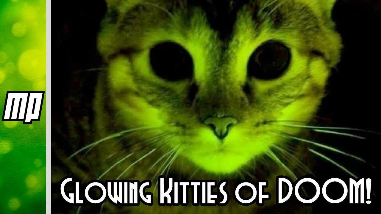 Genetic Engineering And Glowing Kitties Of Doom Youtube