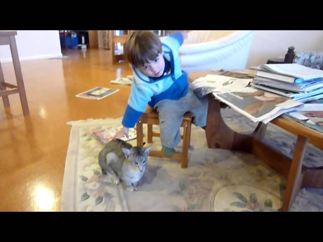 Thomas e o gato da Nana - 5 Maio 2012 TRAVEL_VIDEO