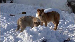 Собаки обглодали тело своего хозяина. MestoproTV(Все последние происшествия вы можете найти в разделе
