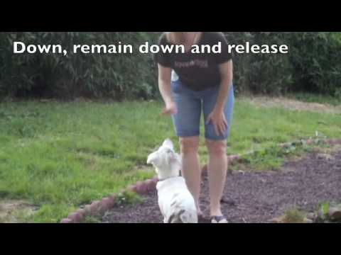 Deaf puppy training video