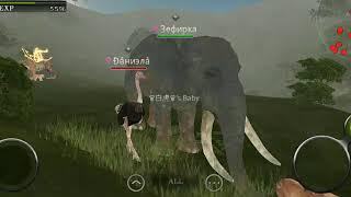 Мои друзья в животные онлайн