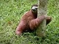 Baby Sloths Get Potty Trained | Too Cute