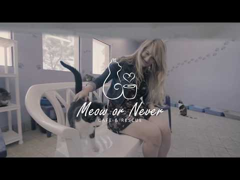 Meow or Never Cafe: IndieGoGo Campaign Video