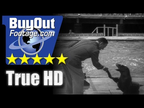 HD Historic Stock Footage - SEALS PERFORM AMAZING STUNTS 1941
