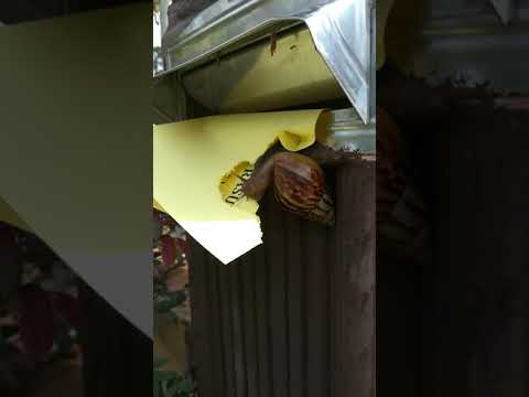 A Snail Speed Reading My Fresh Letter!