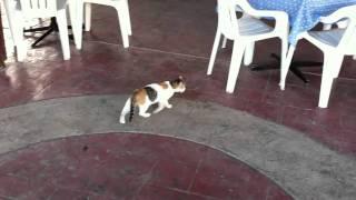 Коты Кипра в ресторане отеля