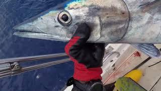 Spearfishing 2018 Raiatea X